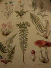 Leclerc du Sablon, Nos fleurs, plantes utiles et nuisibles